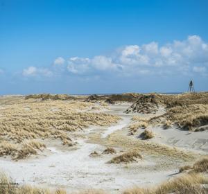 Strand/natuur Ameland